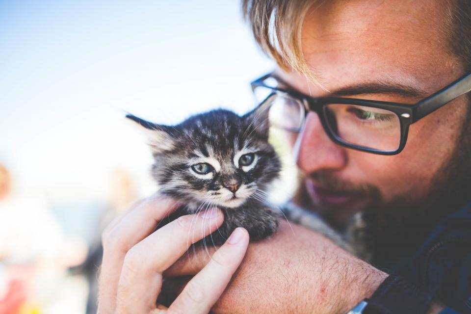 people man eyeglasses kitten cat pet animal