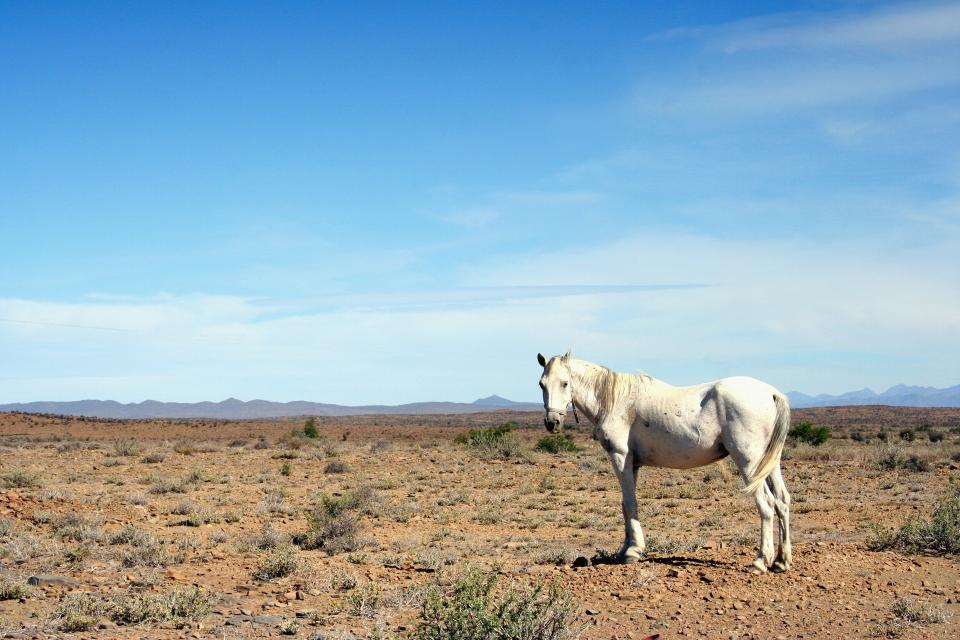 white horse animal sunny day blue sky clouds horizon grass field