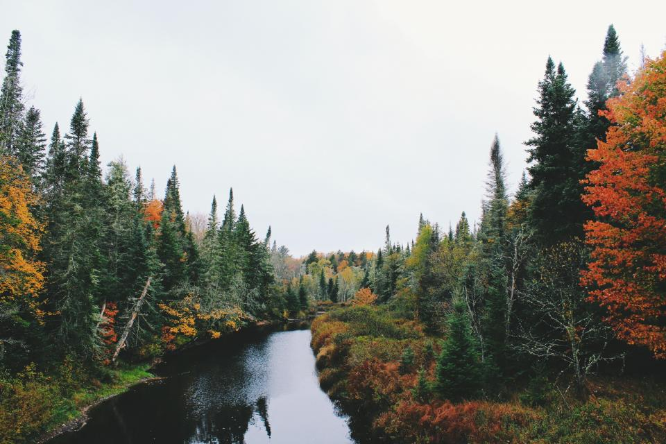 nature landscape trees grass autumn fall water river lake travel adventure