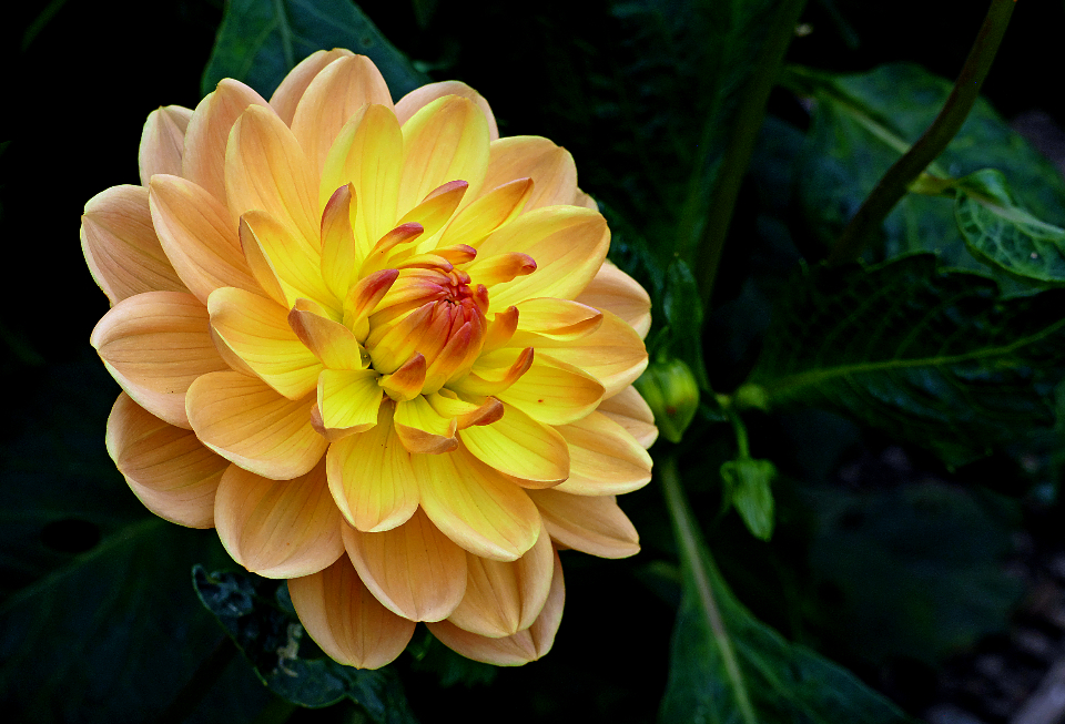 yellow flower close up garden fresh nature outdoors colorful bright flower pedals organic natural plants vegetation beautiful