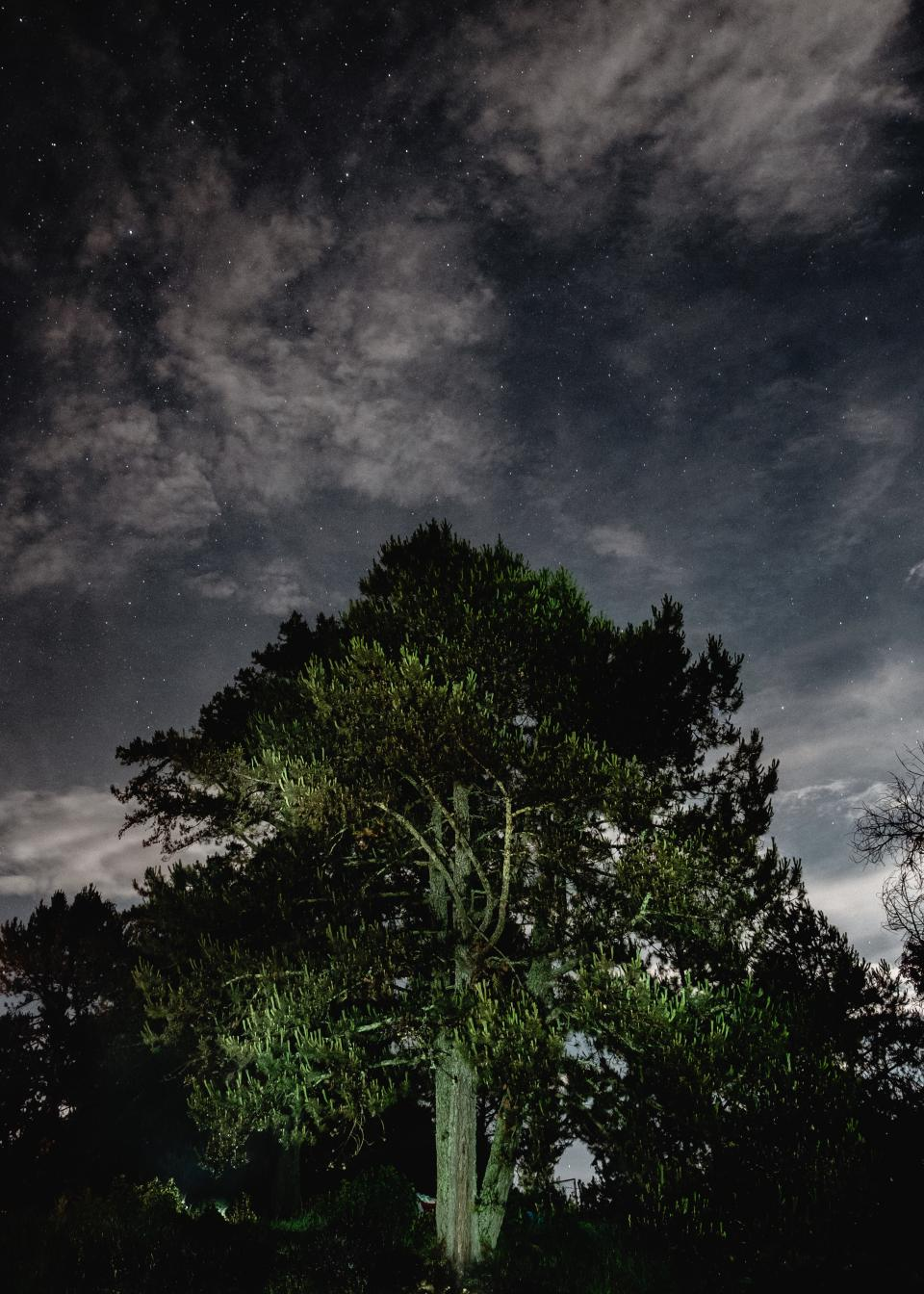tree tall leaves trunk nature sky clouds dark stars night aesthetic