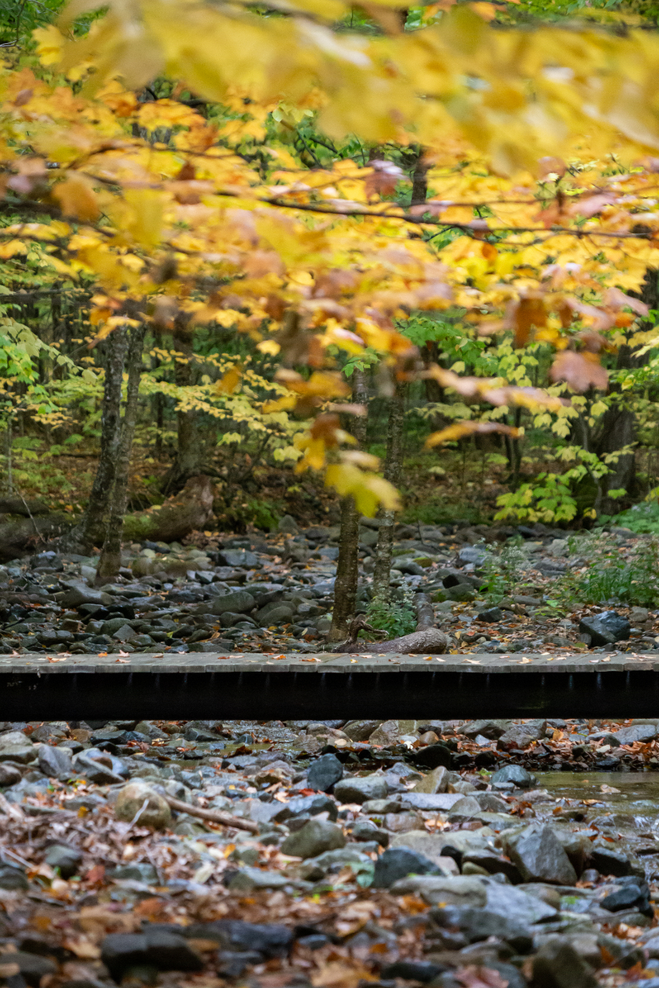 autumn woods nature forest hike trees fall foliage colorful peaceful adventure outdoors leaves rock