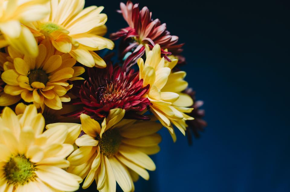 flowers bloom yellow red petals