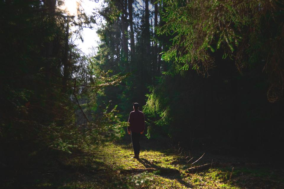 guy man male people back walk leave road path forest trees grass plants light shadows