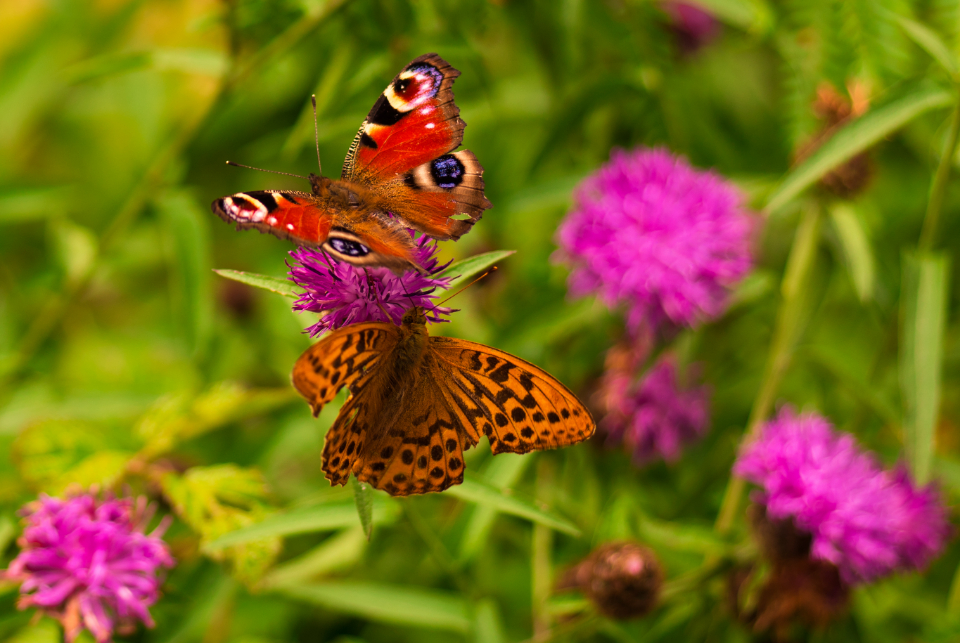 butterflies spring flowers summer nature outdoors flying colorful grass green plants natural