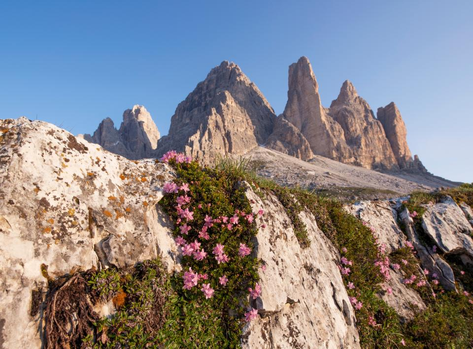 nature landscape mountain flowers bloom autumn fall pink green leaves grass travel adventure cliff