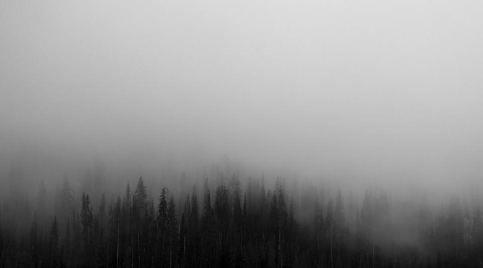 trees forest woods fog foggy grey sky nature