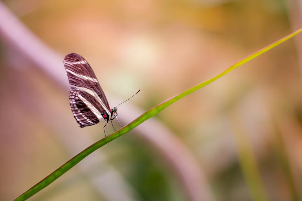 butterfly insect animal nature plant blur green leaf