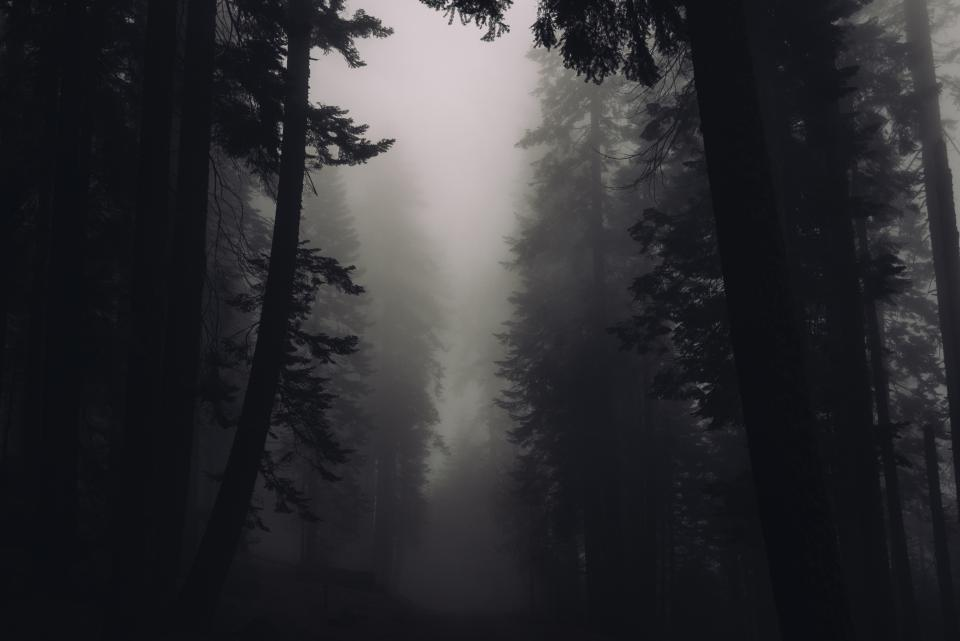 trees forest woods fog foggy dark outdoors nature