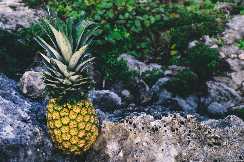pineapple dessert appetizer fruit juice crop rock nature
