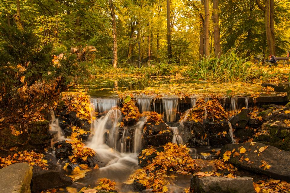 forest trees plants nature landscape stream water leaf fall autumn rock