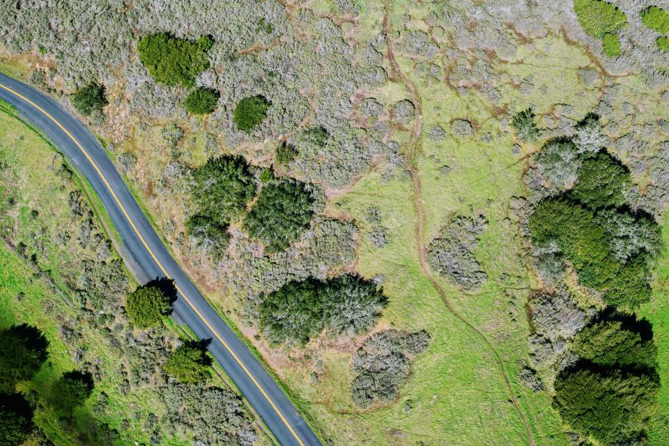 tree plant nature green grass outdoor road street aerial view