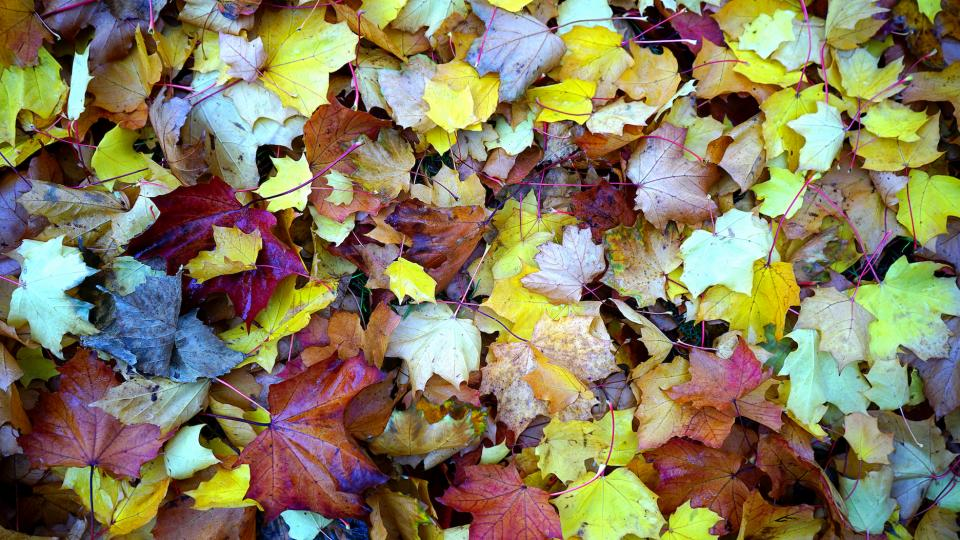 nature plants trees leaves colors