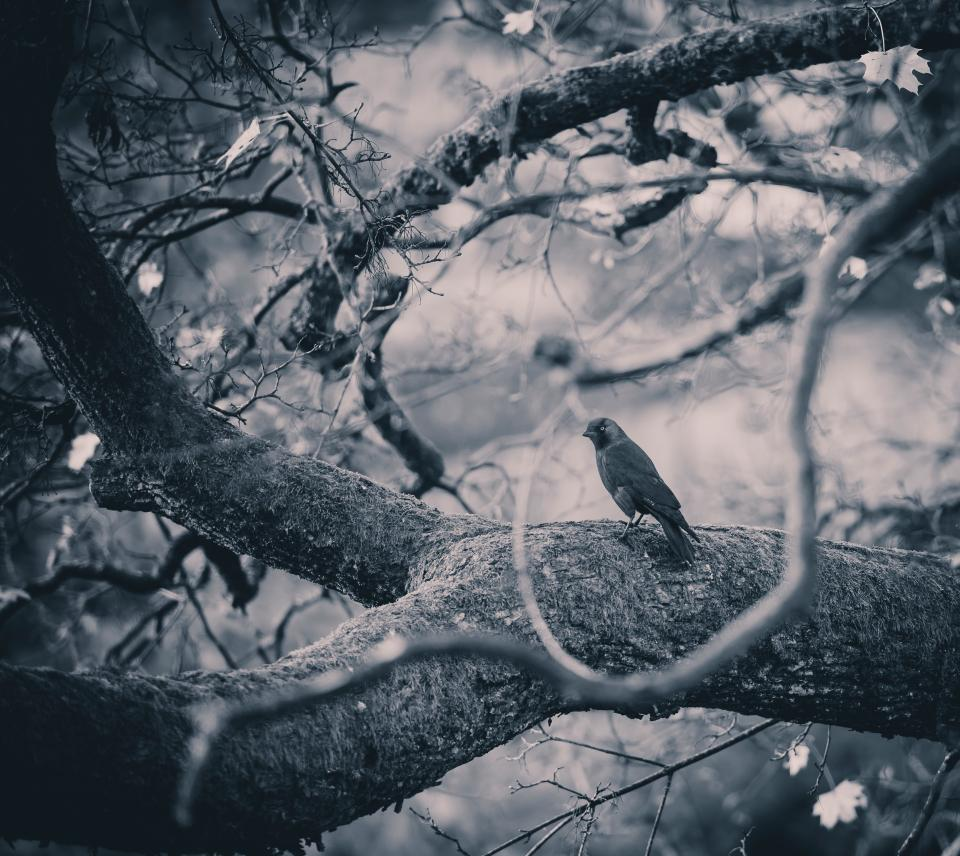 trees forest bird twigs forest woods monochrome black and white