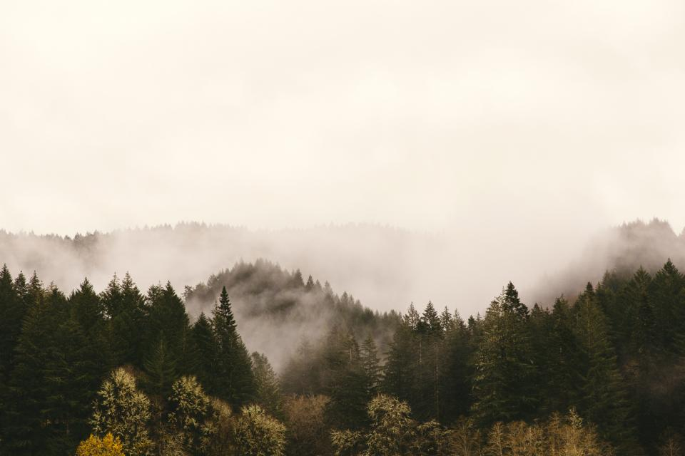 hills pines mountains fog clouds nature adventure travel trip green leaves forest landscape sky