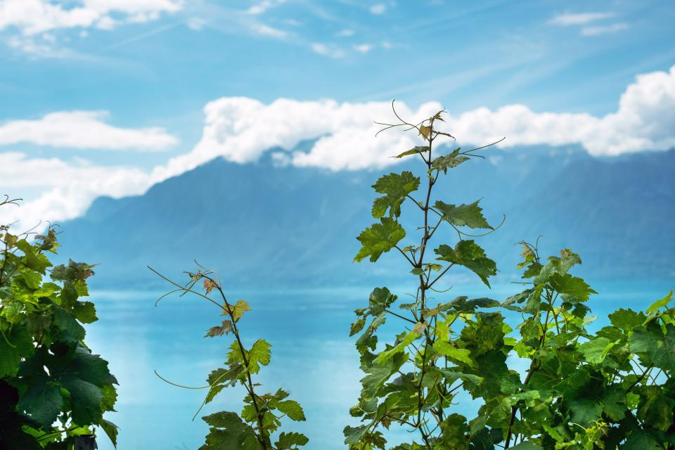 green plants vine nature sky clouds mountain view ocean blue sea