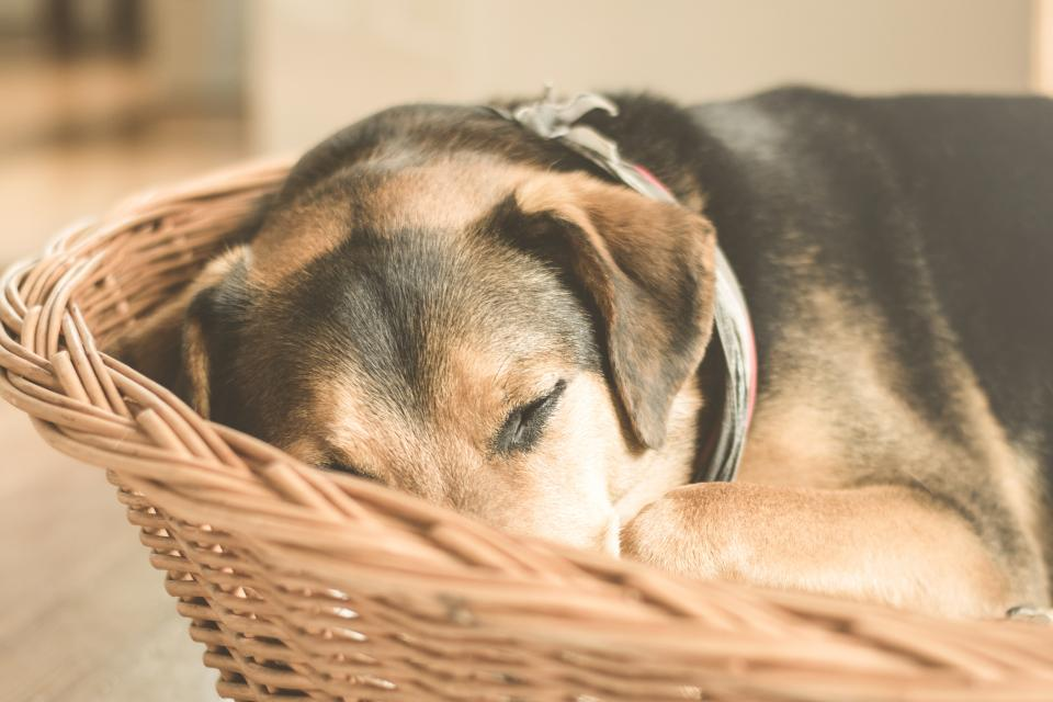 dog sleeping tired animal basket