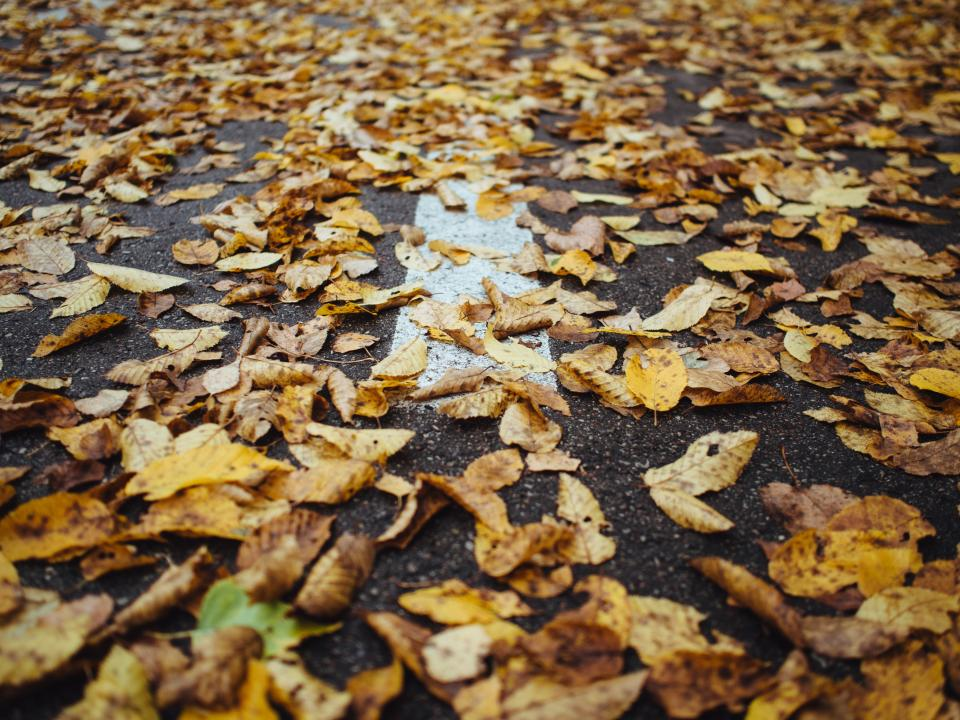 leaves autumn fall pavement road street