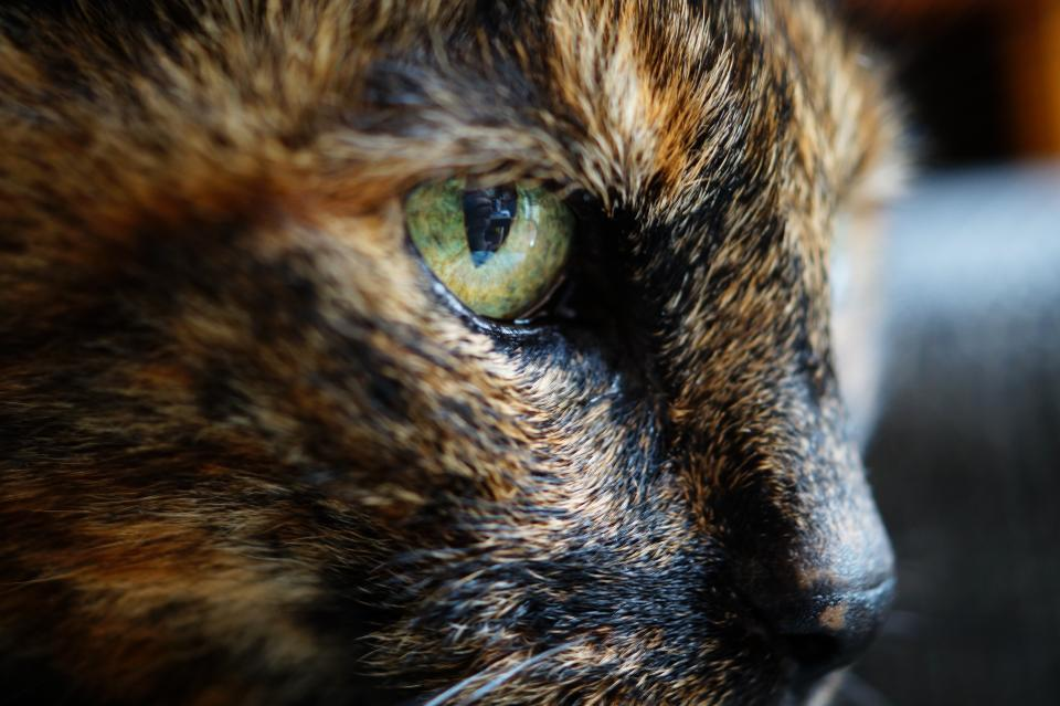 animals feline cats whiskers snout fur fierce adorable eyes curious still bokeh