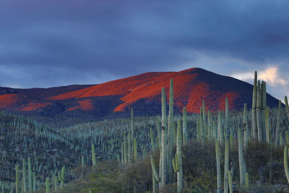 nature landscape mountains slope summit peaks cactus sky clouds complement green orange purple