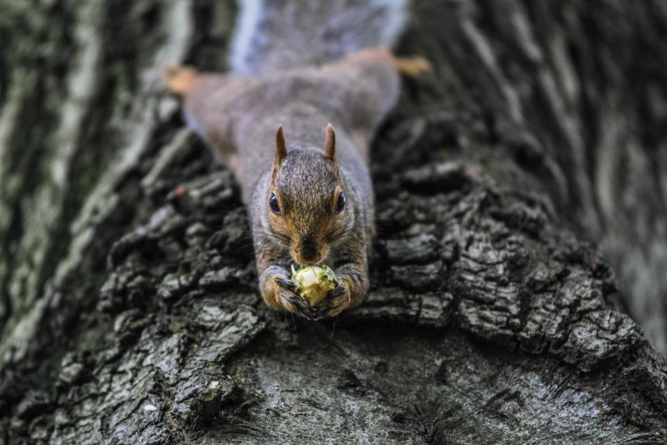 squirrel animal eating tree branch wood trunk