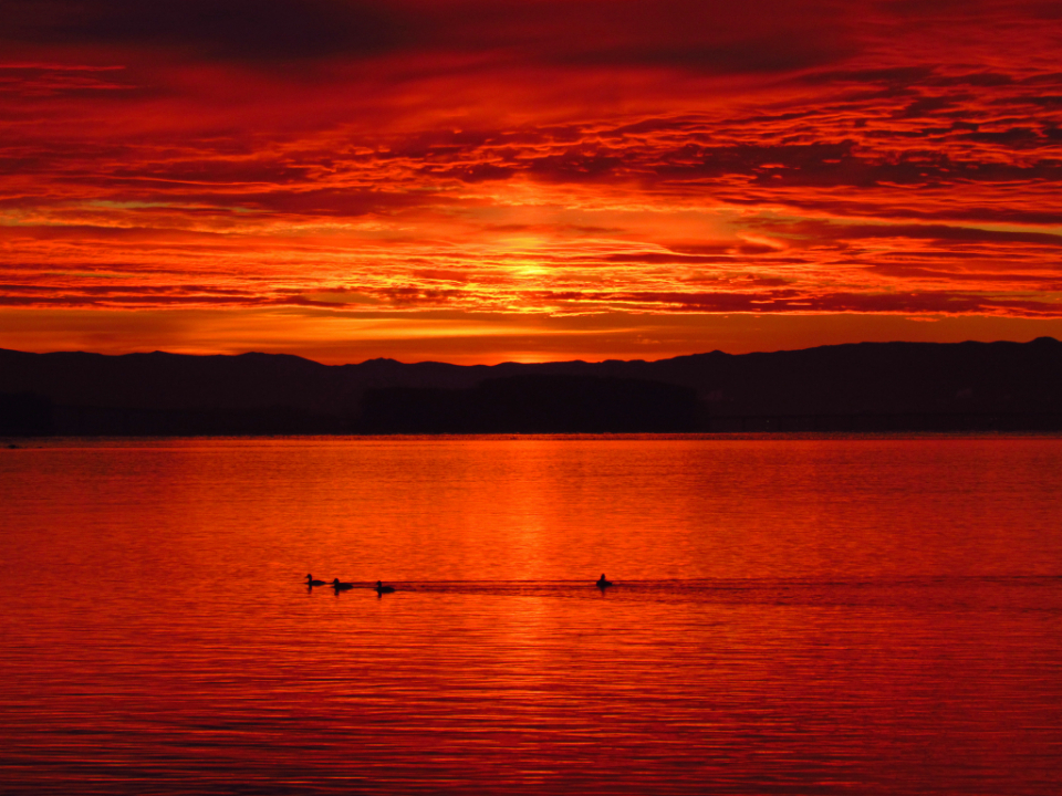 red lake sunset warm nature outdoors water birds animals swimming evening beautiful natural clouds silhouette mountains landscape scenic