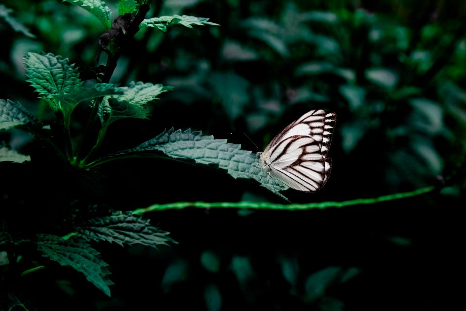 butterfly plants leaves green nature