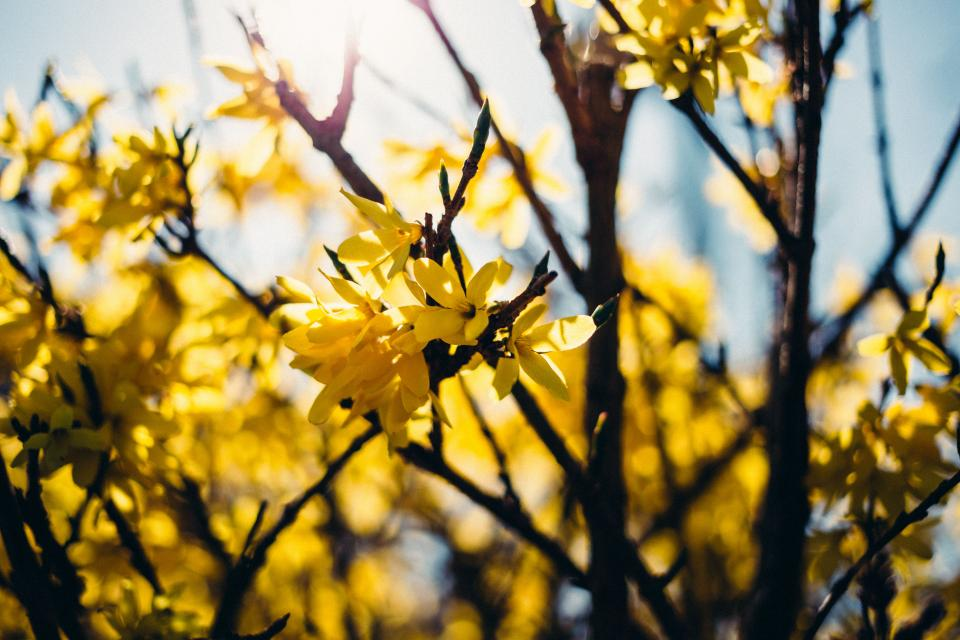 yellow flower trees plant nature branch garden outdoor petals blur bokeh sky