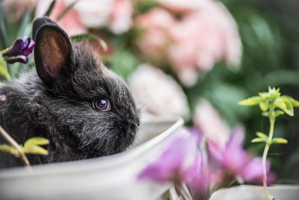 rabbit pet animal flowers outside plants nature
