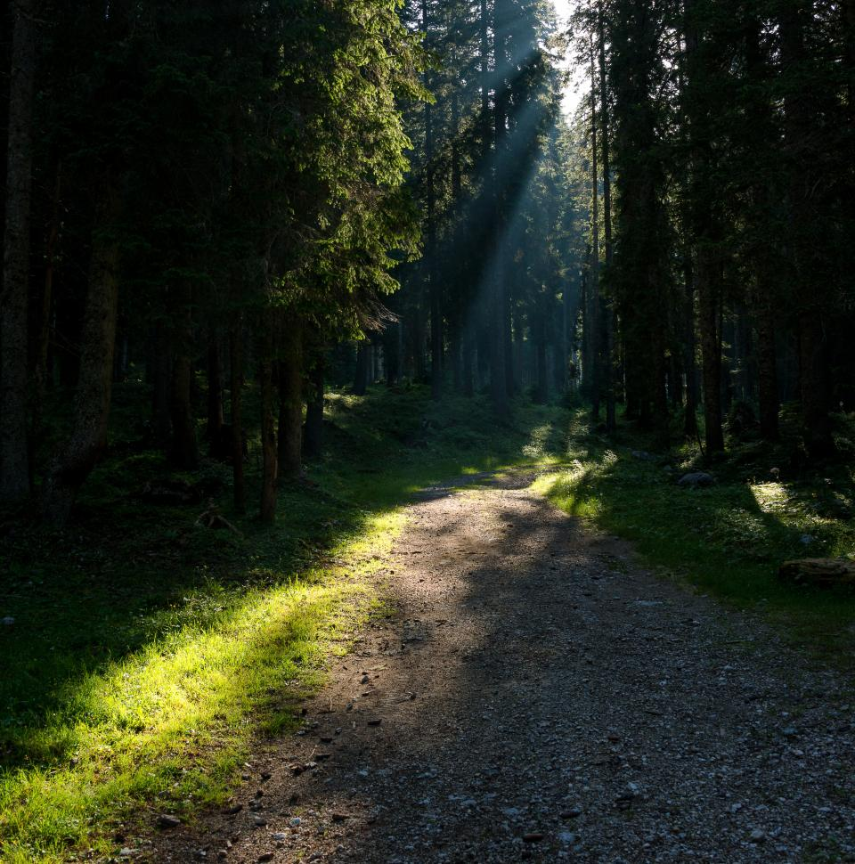 nature travel adventure trip trees vacation green brown forest woods trek
