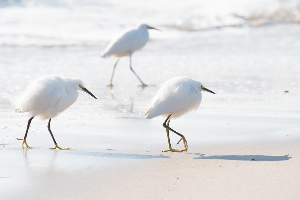 white bird animal sea ocean water beach sand