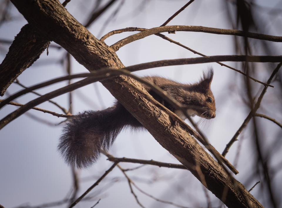 squirrel animal nature trees branch woods