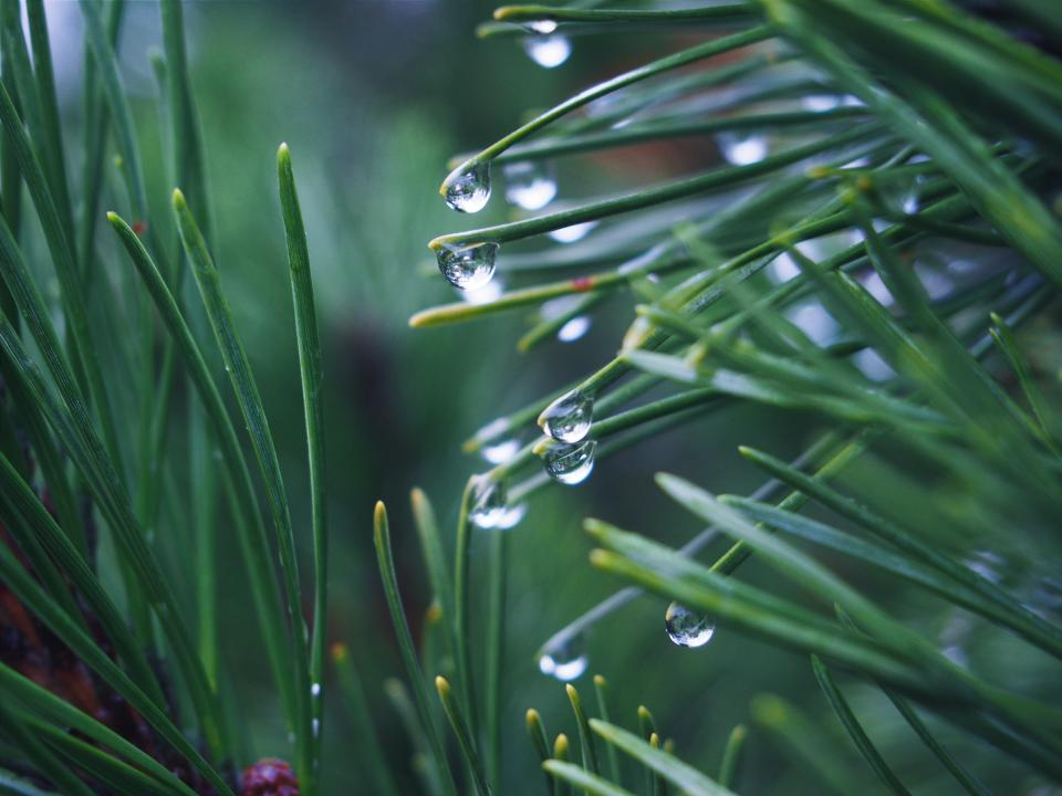 green grass plants raining rain drops wet nature