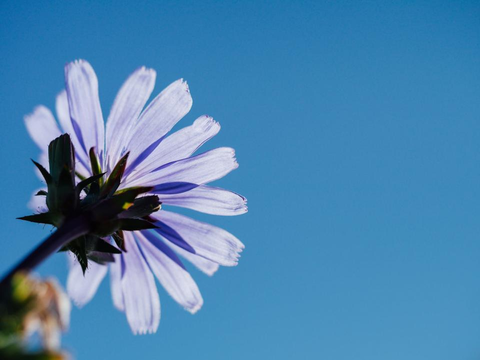 purple flower blue sky sunshine summer nature