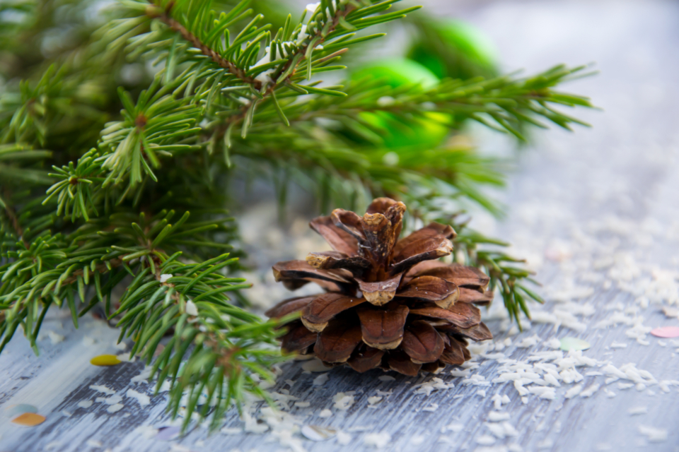 christmas background spruce branch needles green pine cone brown holiday christmas new year branch blurred background