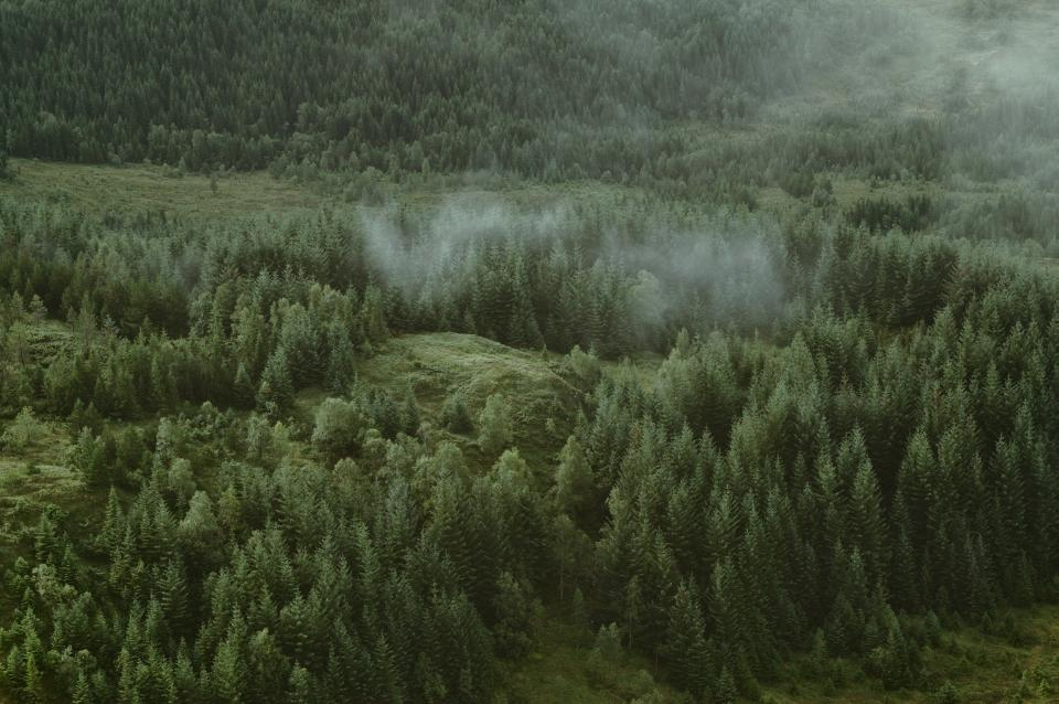 green trees plants forest grass fog cold weather nature