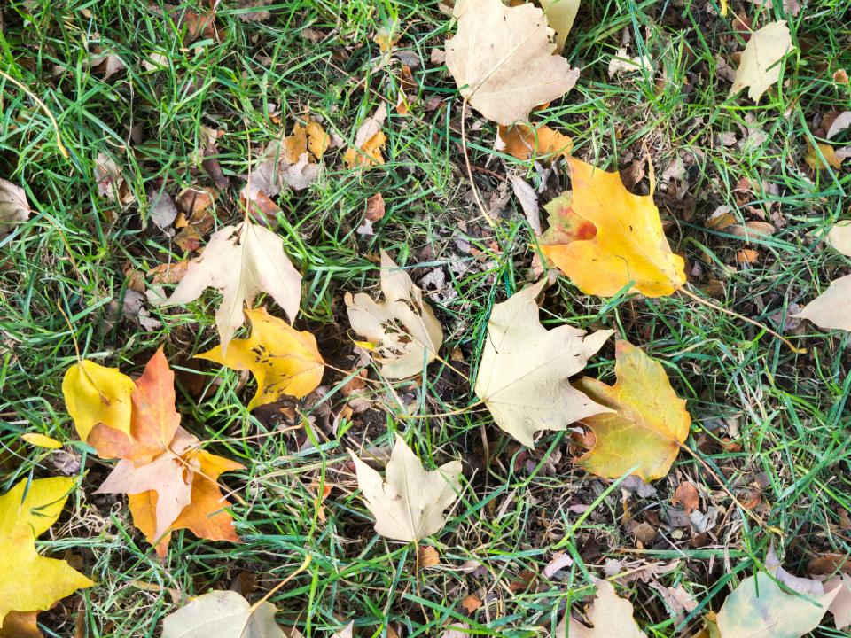 grass ground leaves leaf fall autumn nature
