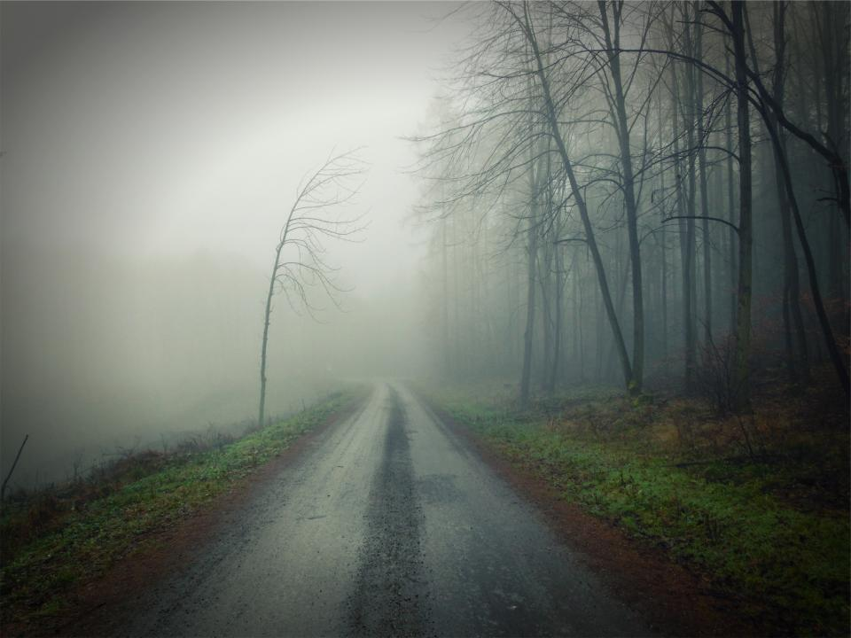 dirt road fog dark trees forest