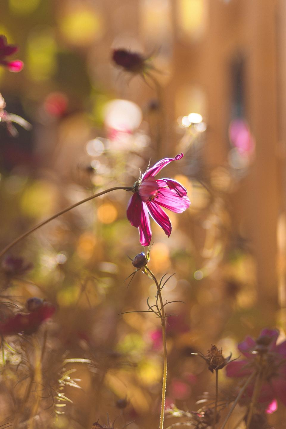 flowers nature blossoms branches bed field stems stalk petals purple buds still bokeh outdoors garden