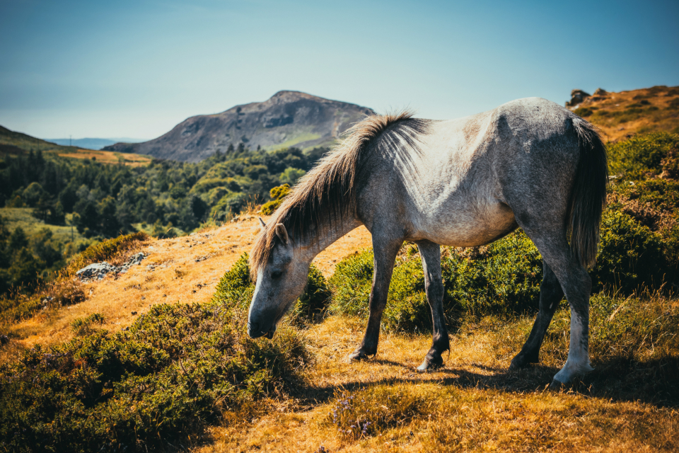 wild horse landscape hilss mountain summer pony animals pet nature grass eat plants path hike