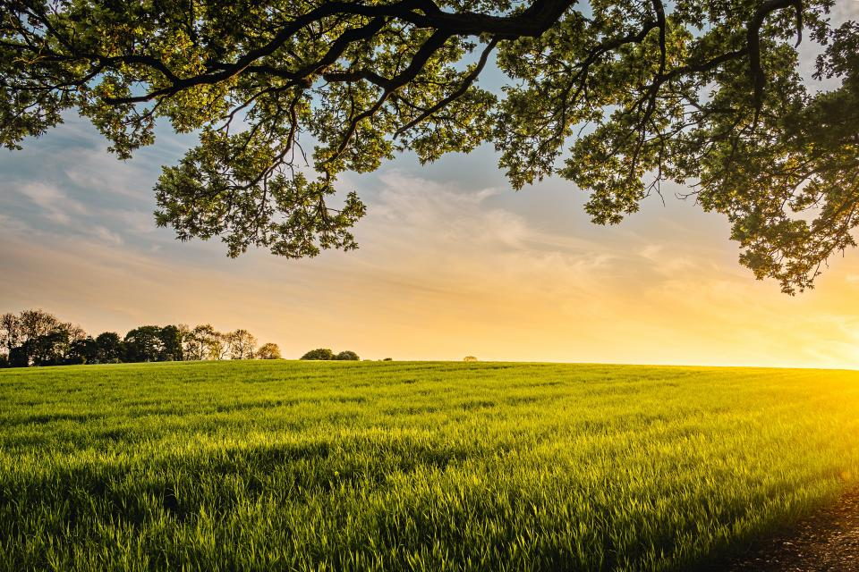 green field crops agriculture farm nature yard trees plant outdoor horizon cloud sky sunset