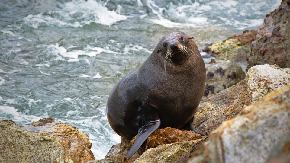ocean water nature rocks sea lion animal