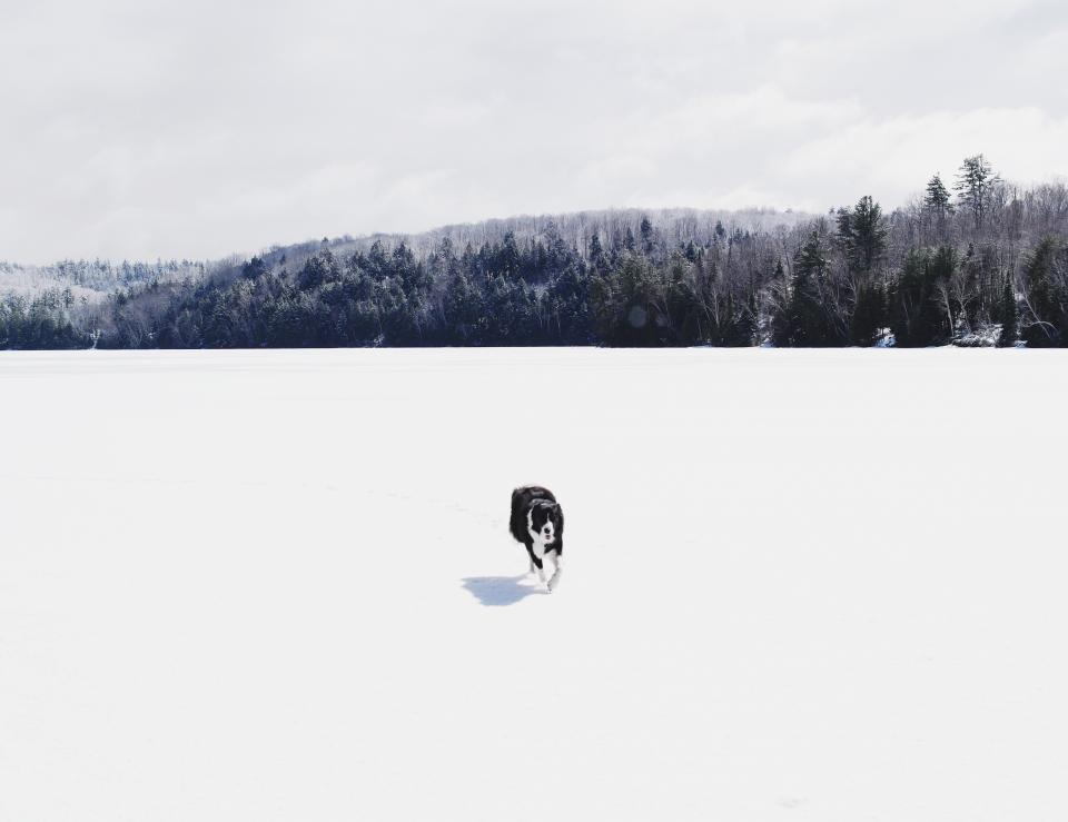 dog animal snow winter cold weather woods forest clouds sky travel adventure