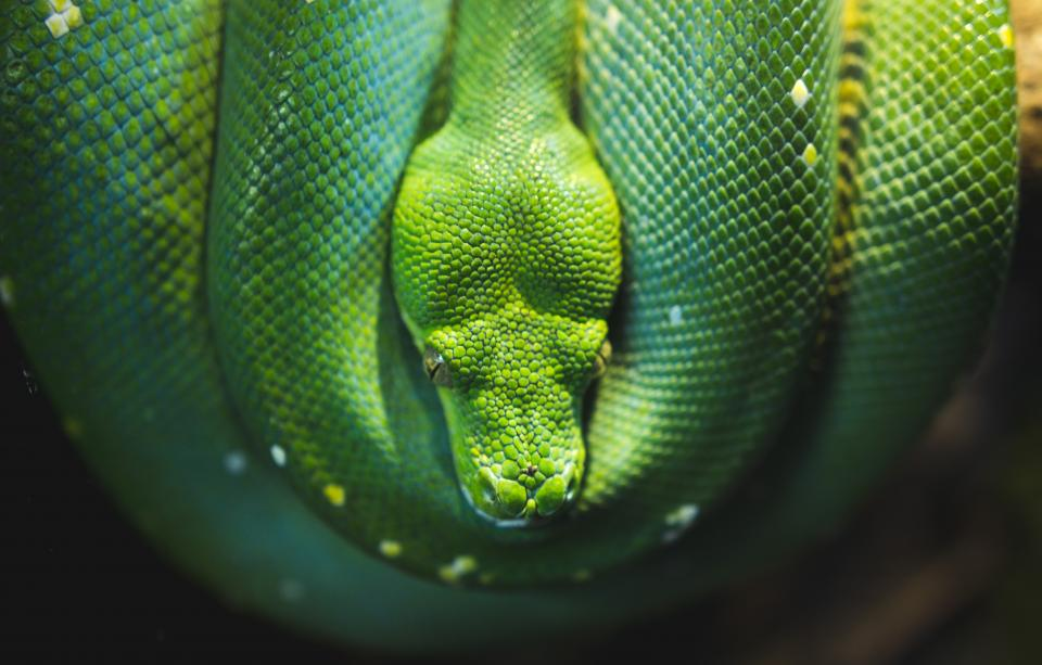 green snake reptile nature wildlife outdoor