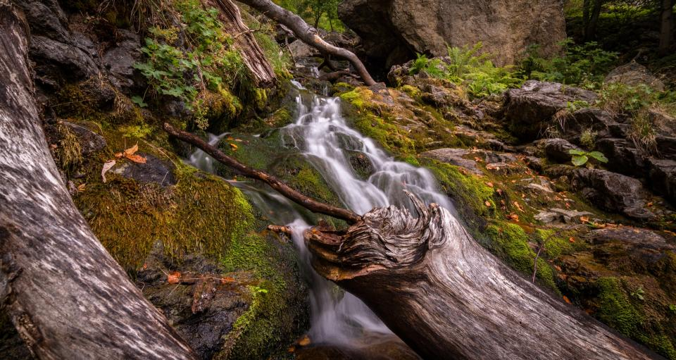 river stream water rock green moss plant wood nature