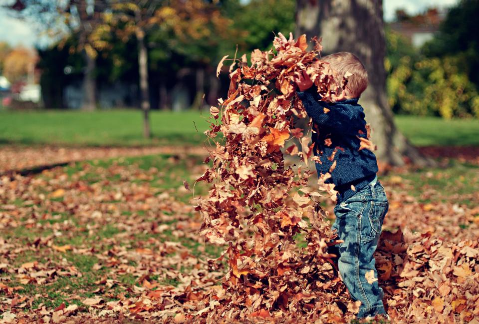 leaves fall autumn boy child kid playing fun nature outdoors sunshine park trees grass