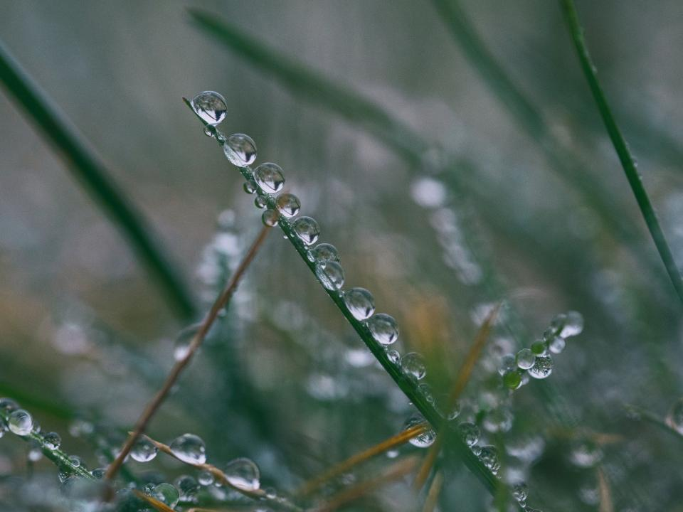 grass leaf water drops wet nature raindrop outdoor plant