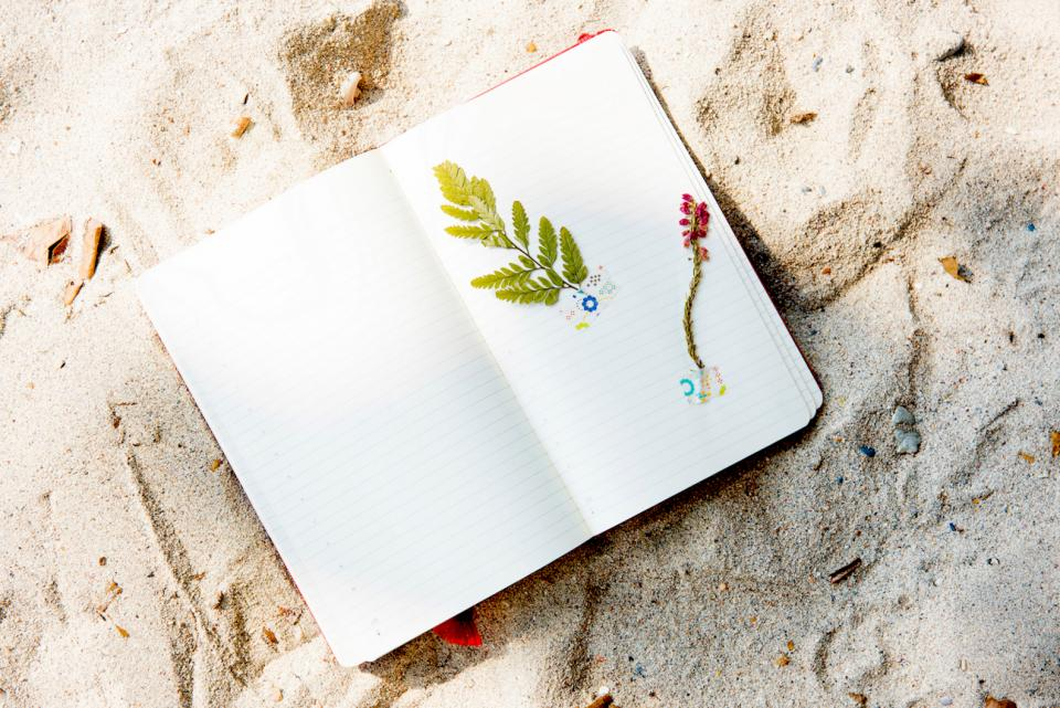 sand beach plants notebook arts crafts