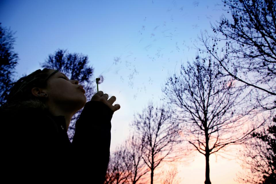 girl woman female blowing trees sky people flowers dandelion nature stem dark