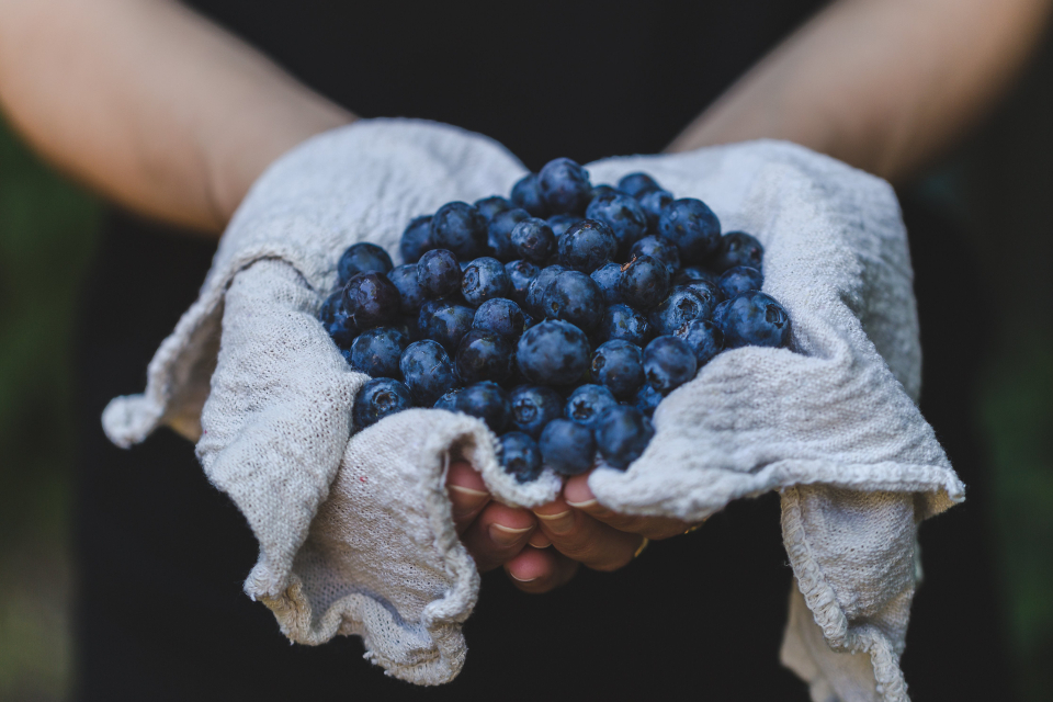 blueberries hands handpicked handmade food edible farm healthy snack nutrition diet nutritional fruit fresh bokeh arms holding